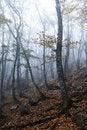 Free Autumn Wood Royalty Free Stock Photos - 16642888