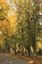 Free Autumn Alley In The Park Stock Image - 16645691