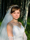 Free Portrait Of Bride In A Birch Forest Royalty Free Stock Photography - 16647187