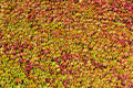 Free Wall Of Leaves Stock Images - 16648814