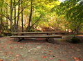 Free Wooden Bench And Table For Picnic In Autumn Forest Royalty Free Stock Photography - 16649107