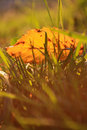 Free Yellow Leave In Grass Royalty Free Stock Photography - 16649417