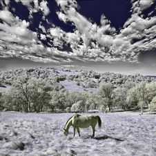 Free Horse Eating In The Wilderness Stock Photo - 16640930