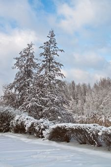 Free Snow-covered Landscape Royalty Free Stock Image - 16641606