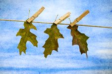 Free Leaf Hanging On Clothesline Royalty Free Stock Photo - 16642365