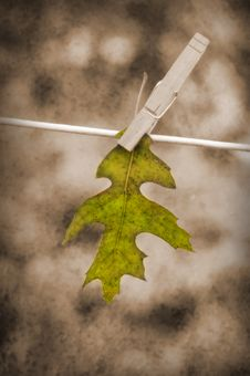 Free Leaf Hanging On Clothesline Royalty Free Stock Images - 16642389