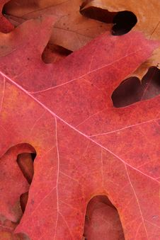 Free Autumn Leaves Stock Photography - 16642492