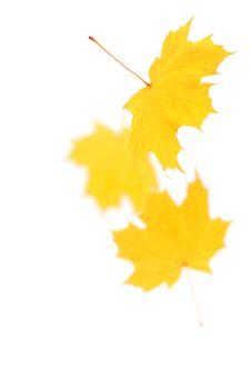 Free Autumn Leaves Stock Photo - 16642610