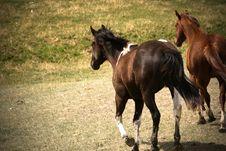 Free Running Horses Stock Photos - 16642893