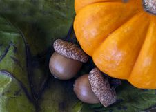 Free Pumpkin And Acorn Royalty Free Stock Images - 16643129