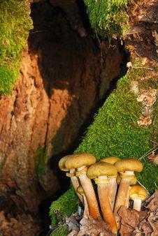 Free Mushrooms Stock Photo - 16643130