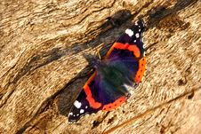 Free Butterfly Royalty Free Stock Photos - 16643198