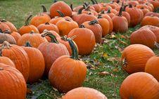 Free Pumpkin Patch Stock Photos - 16643583