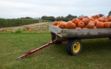 Free Pumpkin Tow Stock Photo - 16643600