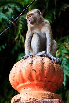 Free Macaque Monkey Sitting On A Pole Stock Photography - 16644072