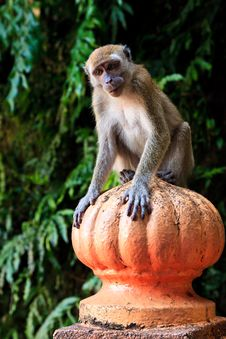 Free Macaque Monkey Sitting On A Pole Stock Image - 16644081
