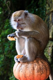 Free Macaque Monkey Sitting On A Pole Stock Photography - 16644182