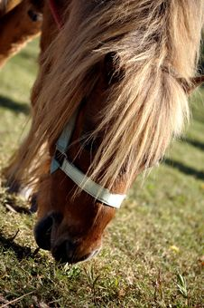 Free Pony Royalty Free Stock Photography - 16644397