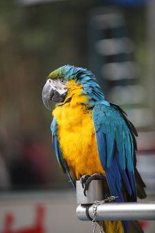 Free Parrot Stock Photo - 16646040