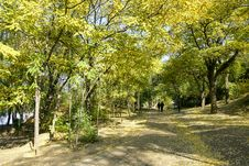 Free Autumnal Park Stock Image - 16646941