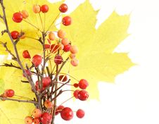 Free Autumn Bouquet Of Branches With Small Apples Stock Photos - 16647323