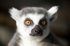 Free Monkey Stock Images - 16648424