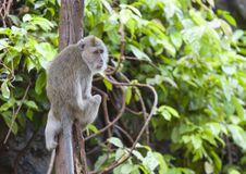 Free Monkey Stock Photo - 16649260