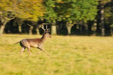 Free Deer Running Royalty Free Stock Image - 16649296