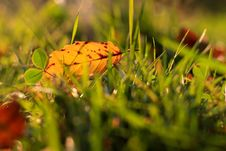 Free Yellow Leave In Grass Stock Image - 16649411