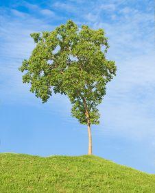 Free Tree Stock Photography - 16649412
