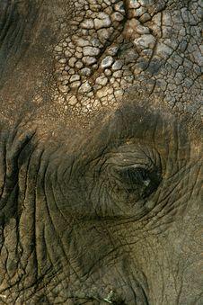 Free Elephant Stock Photo - 16649640