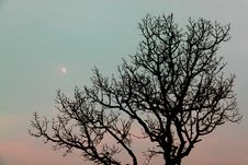 Free Tree Against The Moon Stock Photos - 16649893