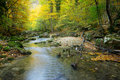Free River In Autumn Forest Stock Image - 16654871