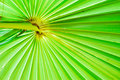 Free Texture Of Green Palm Leaf Background Royalty Free Stock Photos - 16655548