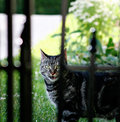 Free Guard Cat Royalty Free Stock Photography - 16656617