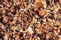 Free Brown Autumn Leafs Stock Photo - 16657470