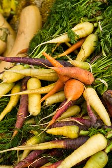 Colorful Carrots Stock Image
