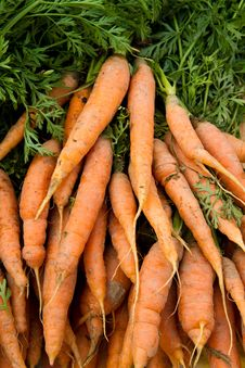 Free Fresh Carrots Royalty Free Stock Photos - 16650928