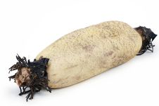 Free Lotus Roots Stock Photos - 16650953