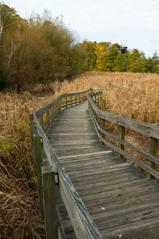 Free Wooden Path To Marsh Stock Image - 16651101