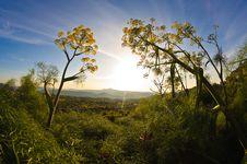Free Sunrise Royalty Free Stock Images - 16651269