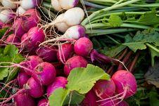 Free Turnips Stock Image - 16651301