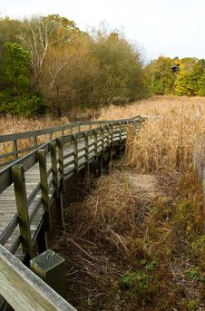 Free Marsh Walkway Royalty Free Stock Image - 16651366