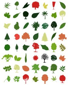 Free Trees And Leafs Stock Photo - 16651380