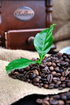 Vintage Coffee Grinder And Fresh Coffee Stock Image