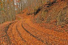 Orange Autumn Path Through Forest Royalty Free Stock Photography