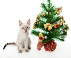 Kitten And Artificial Christmas Tree. Stock Images