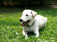 Free Dog On Green Grass Royalty Free Stock Photo - 16652525