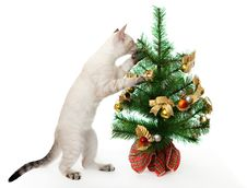 Kitten And Artificial Christmas Tree. Royalty Free Stock Photo