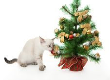Kitten And Artificial Christmas Tree. Royalty Free Stock Photography